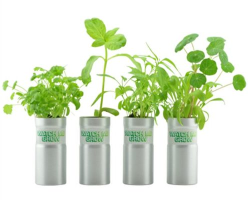 Desktop Garden - Eco friendly promotional product