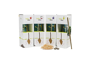 Promotional Plants - Baby Fruit Tree Kit