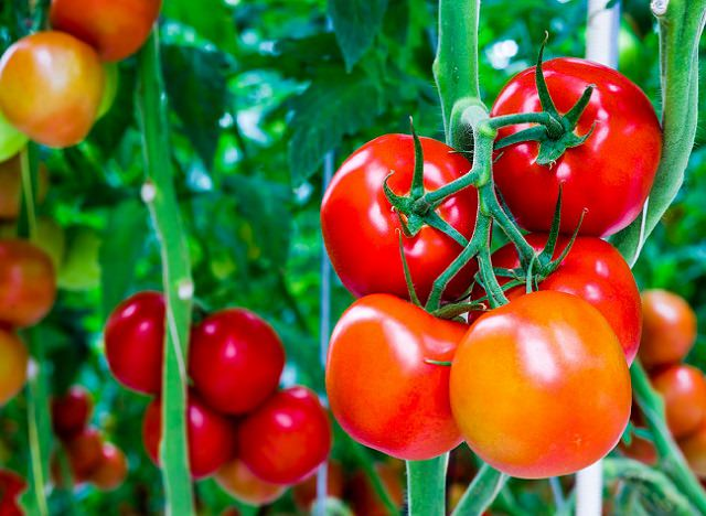 tomatoes that can be grown with Seedsticks™