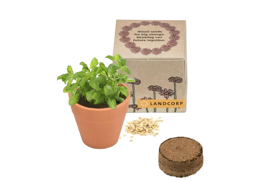 Promotional Seed Grow Kit - Box Pack Product Shot