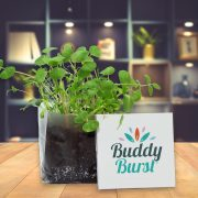 Instant Garden Seed Kit - Add your logo