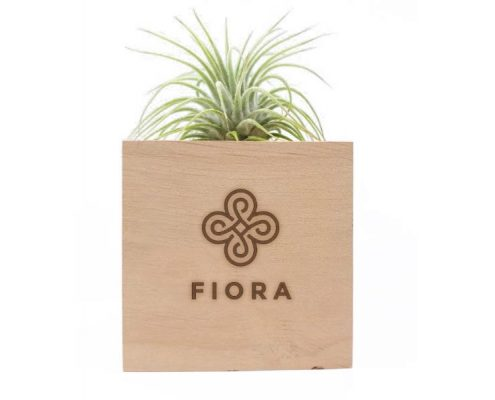 Air Plant with Custom Engraved Box