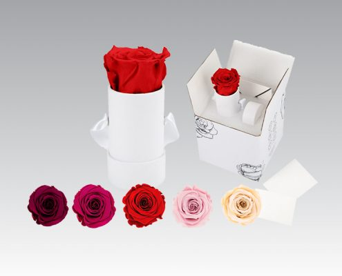 Infinity Rose - Colour Range